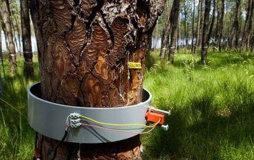 کونیکا مینولتا 4000 درخت در هند می کارد